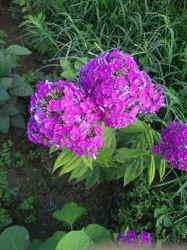 何の花.jpg