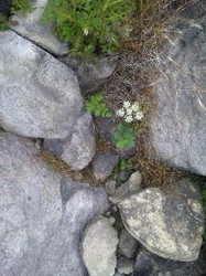 山頂の花.jpg