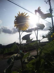 夏の風邪.jpg
